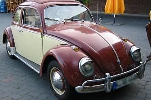 000_bug-14-300x200
